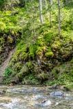 Orilla cubierta de musgo del río de la montaña imágenes de archivo libres de regalías