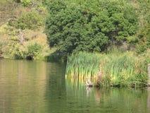 Orilla de agosto de un lago del verano fotografía de archivo libre de regalías