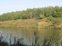 Orilla de agosto de un lago del verano imágenes de archivo libres de regalías