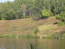 Orilla de agosto de un lago del verano imagen de archivo libre de regalías