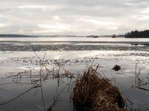 Orilla de la primavera con hielo de fusión y cañas muertas Imagen de archivo libre de regalías