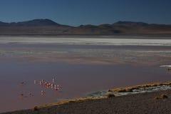 Orilla de Laguna Colorada con los flamencos Fotos de archivo libres de regalías