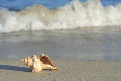 orilla de mar Fotos de archivo