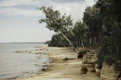 Orilla de mar con la arena y el abedul amarillos en verano latvia Imágenes de archivo libres de regalías