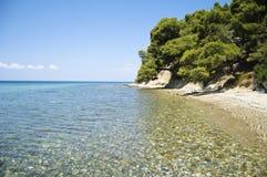 Orilla de mar con los árboles arriba Fotos de archivo libres de regalías