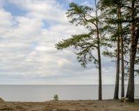 Orilla de Sandy del día de primavera fresco del lago y del pino Fotos de archivo
