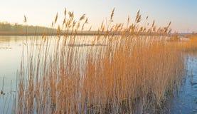 Orilla de un lago en invierno Imagenes de archivo