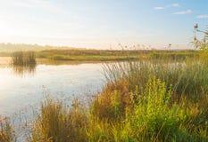 Orilla de un lago en la salida del sol Imagen de archivo libre de regalías