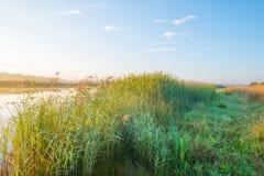 Orilla de un lago en la salida del sol Fotografía de archivo libre de regalías