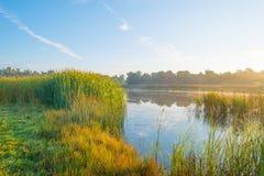 Orilla de un lago en la salida del sol Foto de archivo libre de regalías