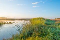 Orilla de un lago en la salida del sol Fotos de archivo libres de regalías