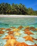 Orilla de una playa tropical con las estrellas de mar subacuáticas fotos de archivo libres de regalías
