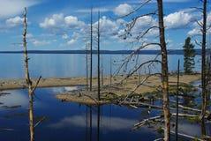 Orilla de Yellowstone del lago, Wyoming Fotografía de archivo libre de regalías