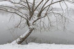 Orilla del árbol del invierno fotografía de archivo libre de regalías
