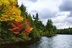 Orilla del bosque y del lago de la caída Imagen de archivo