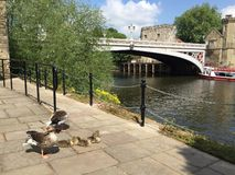 Orilla del centro de ciudad de York con los barcos y el puente fotos de archivo