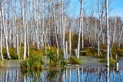 Orilla del humedal de la charca en otoño Imagen de archivo libre de regalías