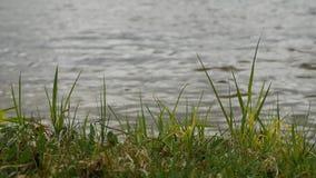 Orilla del lago con la hierba dulce y otras las plantas que balancean en el viento almacen de metraje de vídeo