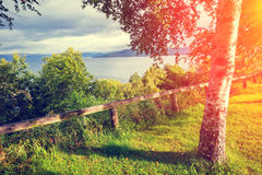 Orilla del lago con los árboles de abedul Imagen de archivo