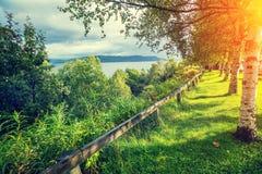 Orilla del lago con los árboles de abedul Imagenes de archivo