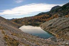 Orilla del lago de Dolina Triglavskih Jezer de los alerces del otoño de Triglav NP Fotos de archivo libres de regalías