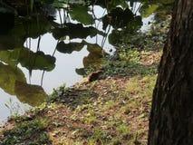 Orilla del lago de las ratas almacen de metraje de vídeo