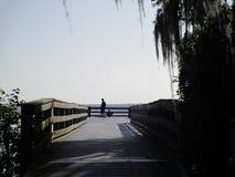 Orilla del lago de los árboles de Cypess foto de archivo