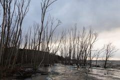 Orilla del lago en invierno con los árboles altos, esqueléticos Foto de archivo