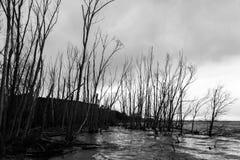 Orilla del lago en invierno con los árboles altos, esqueléticos Imagenes de archivo