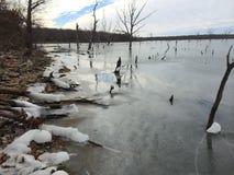 Orilla del lago Longview Fotos de archivo