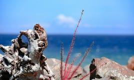 Orilla del océano fotos de archivo