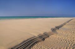 Orilla del océano del Socotra de Yemen Fotos de archivo libres de regalías