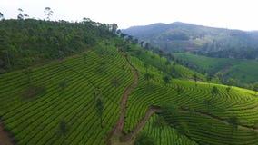 Orilla del río con los animales y las colinas en Kerala la India metrajes