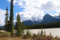 Orilla del río de Athabasca con los árboles de pino Imagenes de archivo
