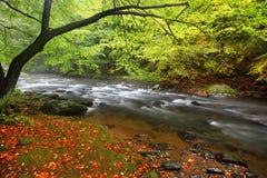 Orilla del río del otoño o del verano con las hojas de la haya El verde fresco se va en ramas por encima de la superficie hace la fotos de archivo libres de regalías