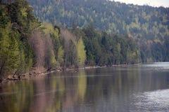 Orilla del río plantada con la conífera Fotos de archivo libres de regalías