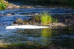 Orilla del río rocosa con el bosque Foto de archivo