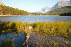 Orilla herbosa del lago Fishercap en Parque Nacional Glacier en Montana los E.E.U.U. imágenes de archivo libres de regalías