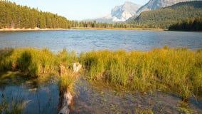 Orilla herbosa del lago Fishercap en Parque Nacional Glacier en Montana los E.E.U.U. fotos de archivo libres de regalías