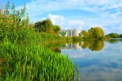 Orilla juncosa del río de Dnieper imagenes de archivo