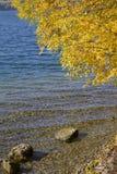 Orilla otoñal del lago con las ondas del azul y las hojas de oro Foto de archivo
