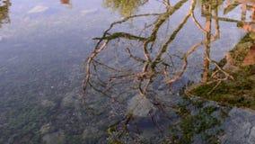 Orilla pedregosa del lago con el agua potable almacen de metraje de vídeo