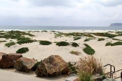 Orilla rocosa con los penachos del seagrass y los persona que toma el sol en la distancia Fotos de archivo