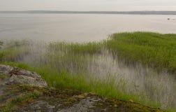Orilla rocosa, la hierba en el agua Imágenes de archivo libres de regalías
