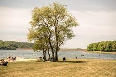 Orilla a solas del árbol y del lago imagenes de archivo