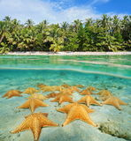 Orilla tropical partida con el submarino de las estrellas de mar Imagen de archivo