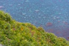 Orilla verde con el mar azul Fotos de archivo libres de regalías