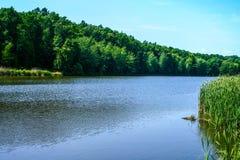Orilla verde de un lago del verano fotografía de archivo libre de regalías