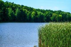Orilla verde de un lago del verano fotografía de archivo