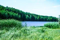 Orilla verde de un lago del verano imágenes de archivo libres de regalías